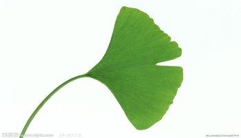 叶子-高等植物营养器官图片