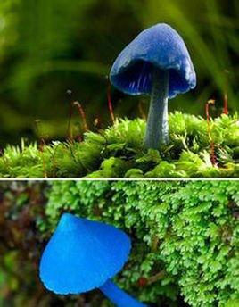 伞菌形态结构图
