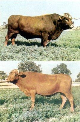 动物对折剪纸牛头