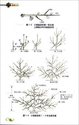 树木生长过程简笔画