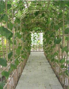 春天生长周期短的蔬菜