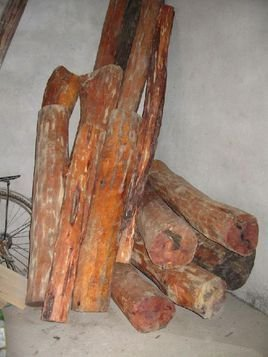 木材弦切面放大镜下可见含横向树胶道的纺锤形射线
