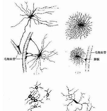 能在光学显微镜下识别各种组织和器官的微细结构;能用正确的医学术语