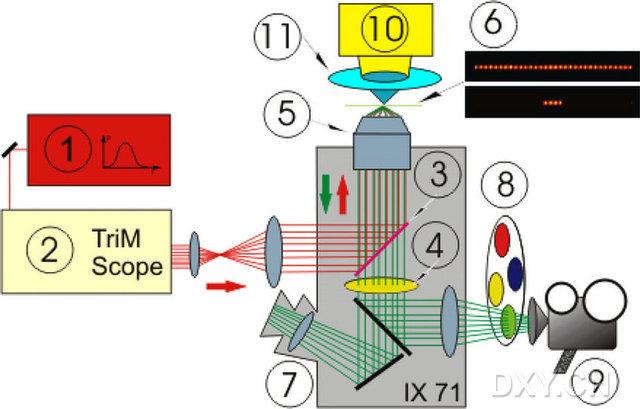植物细胞亚显微镜结构图