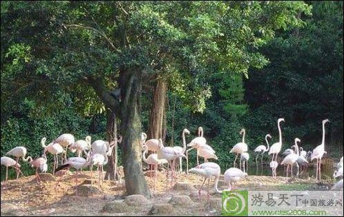 长隆夜间动物园