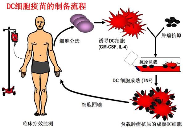 肝细胞结构模式图