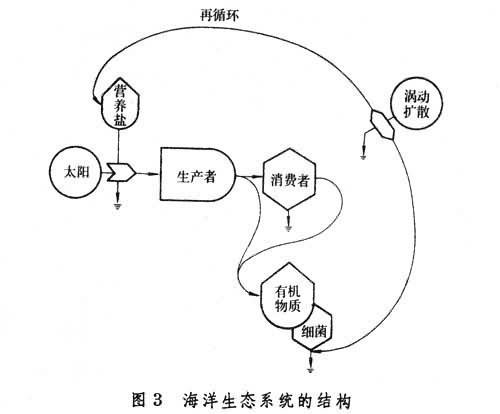 (图3)表示出海洋生态系统的结构