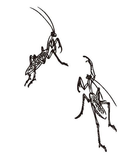花卉昆虫方花盆图样