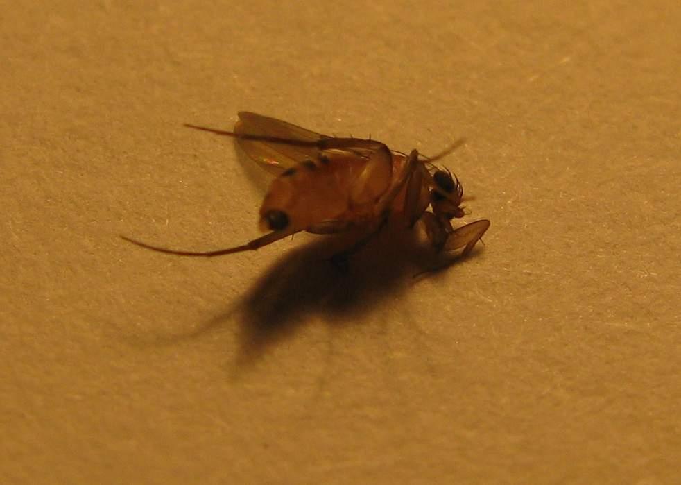 蠓科个体小,飞翔无声,常群聚叮咬人畜.蠓为全变态昆虫.