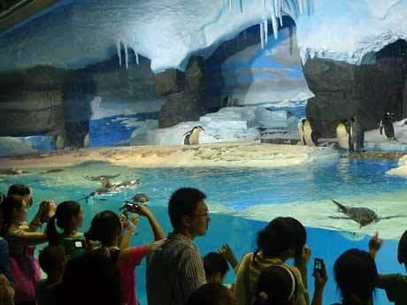 上百头国内罕见的珍稀极地动物以及上千种珍稀海洋