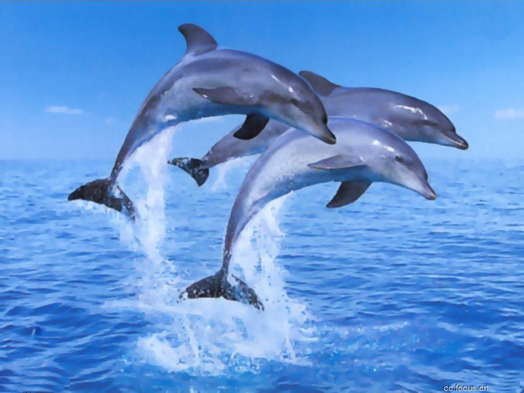 鱼图片大全可爱 海豚