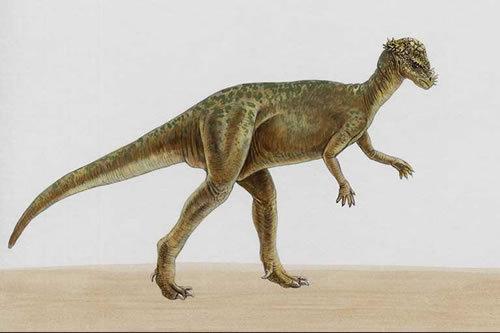 几千亿年前的动物图片